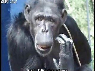 German- Amateur monkey porn